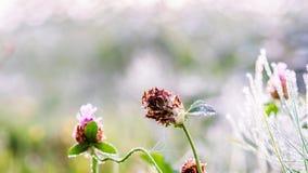金子在晚秋天草和晚花的冬天太阳 免版税库存图片