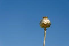 金子在蓝天背景的被喷洒的鸦片 库存照片