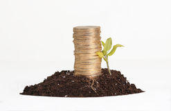 金子投资,概念性 免版税库存照片