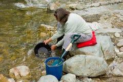 金子的妇女摇摄在云杉的小河, BC 免版税库存照片