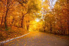 金子秋天在城市公园-黄色树和胡同 库存照片