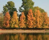 金子秋天的公园 库存图片