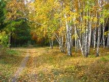 金子秋天风景-道路在一个混杂的森林里 库存图片