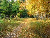 金子秋天风景-道路在一个混杂的森林里 免版税库存照片