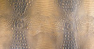 金子/黑暗的褐色的压印的鳄鱼皮革纹理 库存照片