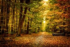 金子10月光在森林里 免版税图库摄影