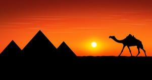 金字塔和骆驼 免版税库存照片