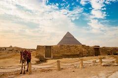 金字塔近骆驼废墟在开罗,埃及 库存图片