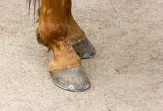 金属化在一个年轻棕色马特写镜头的蹄的马掌 免版税库存图片