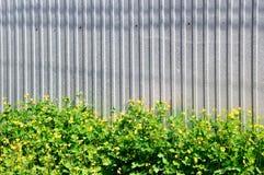 金属化篱芭和白屈菜的黄色花 免版税库存图片