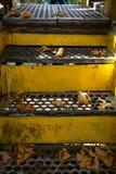 金属台阶 免版税库存照片