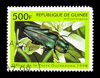 金属木乏味甲虫(Anthaxia hungarica),昆虫serie, 库存图片