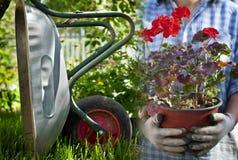 金属独轮车在庭院里 库存照片