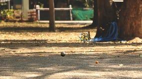 金属球和橙色木球在地面在家庭菜园-演奏上Petanque在一个晴天 免版税库存图片