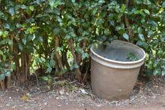 金属盆栽植物的看法的关闭 免版税库存照片