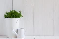 金属罐和喷壶的植物 免版税库存照片