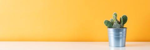 金属罐的仙人掌植物 白色架子的盆的仙人掌房子植物反对柔和的淡色彩上色了墙壁 仙人掌横幅 图库摄影