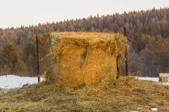 金属网的干草堆 库存照片