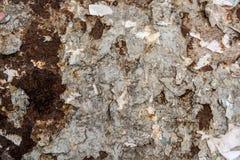 金属表面上的深灰破裂的绘画 库存图片