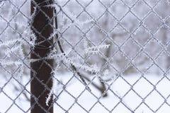 金属滤网篱芭的冬天场面 免版税库存图片
