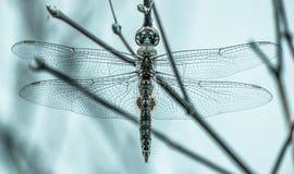 金属蜻蜓 免版税库存照片