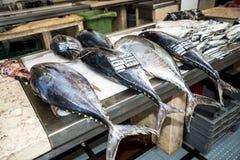 金枪鱼在鱼市、梅尔卡多dos Lavradores或工作者的市场上 免版税库存图片
