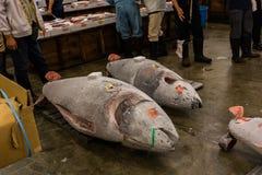 金枪鱼拍卖在Tsukiji鱼市东京上 免版税库存照片