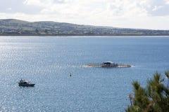 金枪鱼笔,花岗岩海岛,胜者港口,南澳大利亚 免版税图库摄影