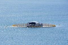 金枪鱼笔,花岗岩海岛,胜者港口,南澳大利亚 库存图片