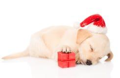 金毛猎犬与圣诞老人帽子和礼物的小狗 免版税库存照片