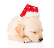 金毛猎犬与圣诞老人帽子的小狗 查出 库存图片