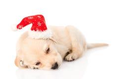 金毛猎犬与圣诞老人帽子的小狗 查出 免版税图库摄影
