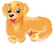 金毛猎犬传染媒介例证,隔绝在白色背景 免版税库存图片