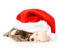 金毛猎犬小狗和英国猫与圣诞老人帽子 查出 库存照片