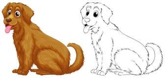 金毛猎犬狗的动物概述 向量例证