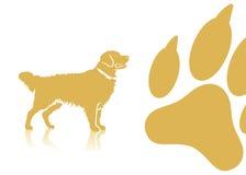 金毛猎犬背景 免版税库存图片