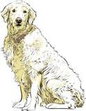 金毛猎犬 向量例证