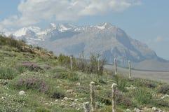 金牛座山 火鸡 峭壁和峡谷 加盖的峰顶雪 库存图片