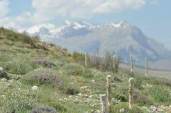 金牛座山 火鸡 峭壁和峡谷 库存图片