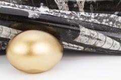 金的鸡蛋和化石被擦亮的,古老的orthoceras 库存照片