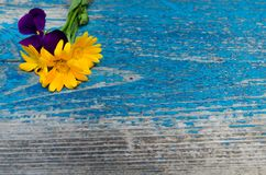 金盏草和紫罗兰花的构成在边在一个老木被绘的蓝色委员会 免版税库存照片