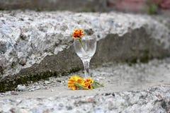 金盏草在石头中的一块玻璃开花 免版税库存照片