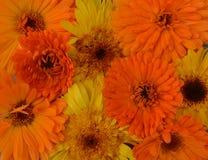 金盏草样式纹理绿色宏观五颜六色的瓣明亮的植物群红色花束瓣植物绽放秀丽春天开花summe 免版税库存照片