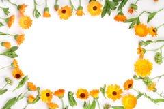 金盏草框架  在与拷贝空间的白色背景隔绝的万寿菊花您的文本的 顶视图 免版税库存图片
