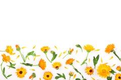 金盏草框架  在空白背景查出的万寿菊花 与拷贝空间的角落您的文本的 顶视图 免版税库存图片