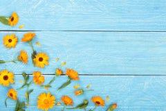 金盏草 在蓝色木背景的万寿菊花与您的文本的拷贝空间 顶视图 免版税库存照片