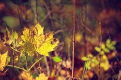 金秋季叶子详细的特写镜头  免版税库存图片