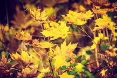金秋季叶子详细的特写镜头  库存照片