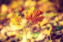 金秋季叶子详细的特写镜头  库存图片