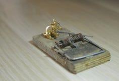 金老鼠和捕鼠器 免版税图库摄影
